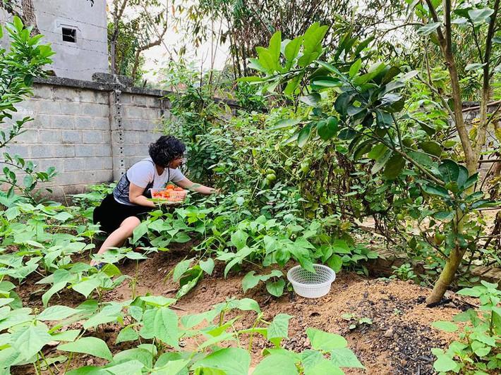 Khu vườn mùa hè đầy ắp sấu, xoài, mít và rực rỡ sắc hoa của diễn viên Hồng Đăng - Ảnh 13.
