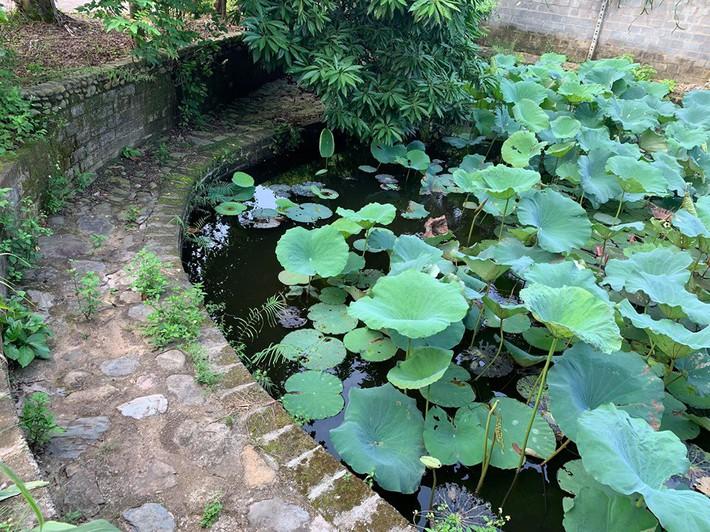 Khu vườn mùa hè đầy ắp sấu, xoài, mít và rực rỡ sắc hoa của diễn viên Hồng Đăng - Ảnh 6.