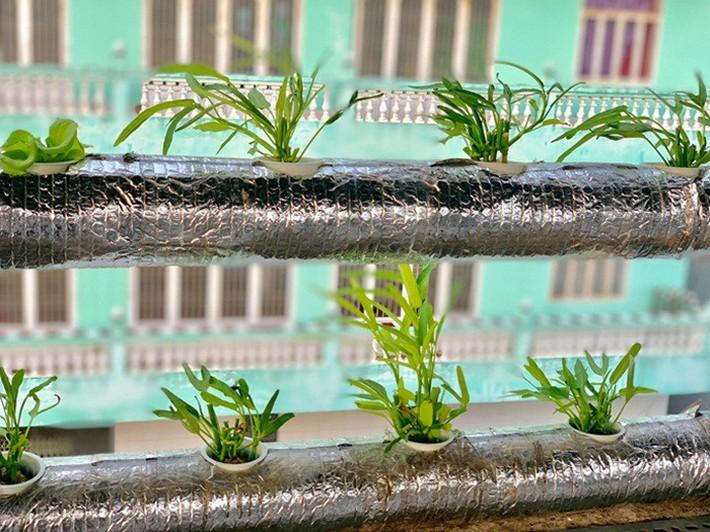 Vườn rau thủy canh ăn không xuể trên sân thượng nhà diễn viên Kha Ly - Thanh Duy - Ảnh 14.