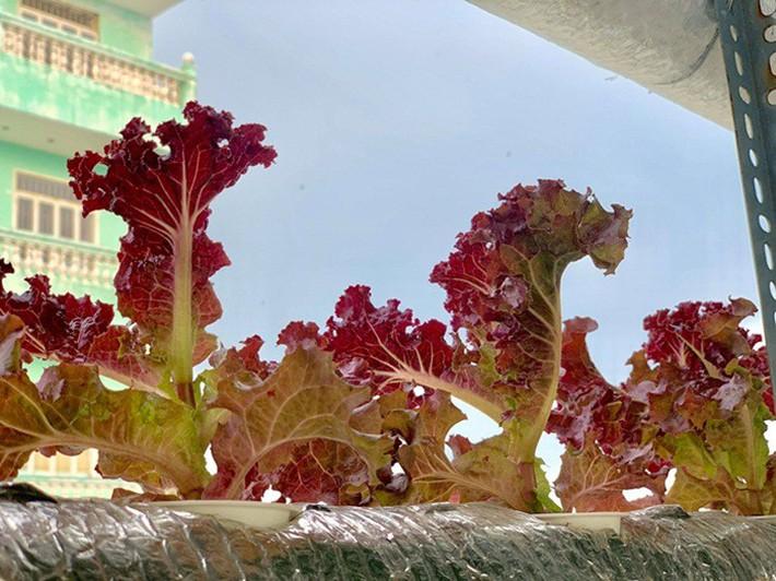 Vườn rau thủy canh ăn không xuể trên sân thượng nhà diễn viên Kha Ly - Thanh Duy - Ảnh 13.