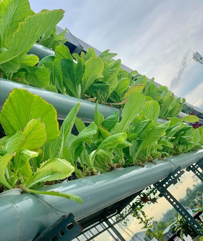 Vườn rau thủy canh ăn không xuể trên sân thượng nhà diễn viên Kha Ly - Thanh Duy - Ảnh 12.
