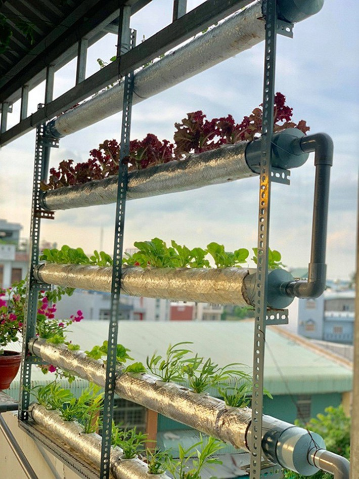 Vườn rau thủy canh ăn không xuể trên sân thượng nhà diễn viên Kha Ly - Thanh Duy - Ảnh 3.