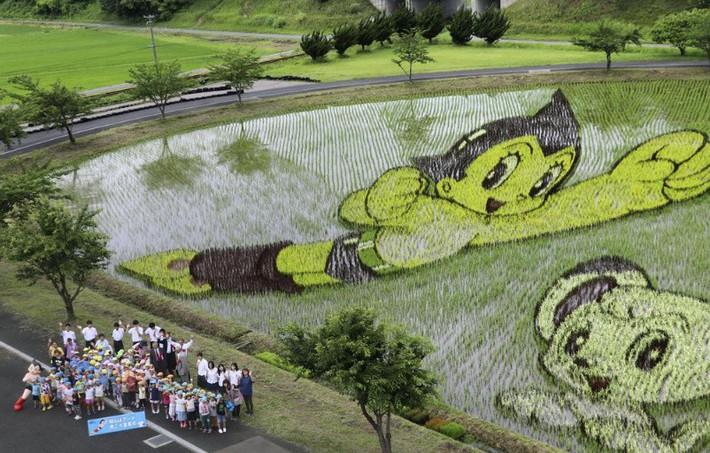 tezuka-osamu-rice-paddy-art-2