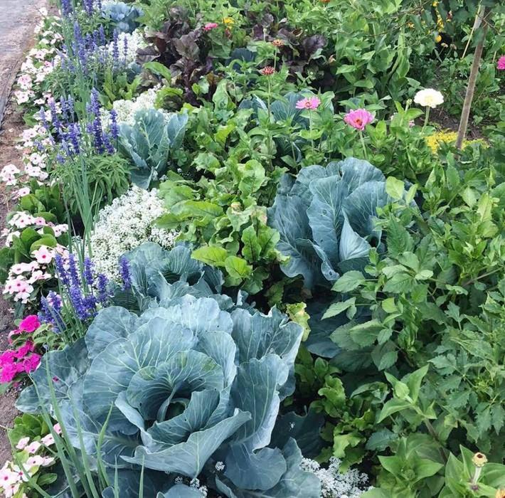 Cuộc sống đẹp như cổ tích của cặp vợ chồng cùng 4 con trai bên mảnh vườn đầy hoa và rau đẹp như cổ tích - Ảnh 18.