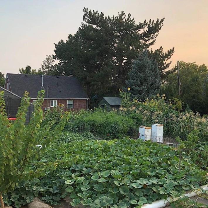 Cuộc sống đẹp như cổ tích của cặp vợ chồng cùng 4 con trai bên mảnh vườn đầy hoa và rau đẹp như cổ tích - Ảnh 26.