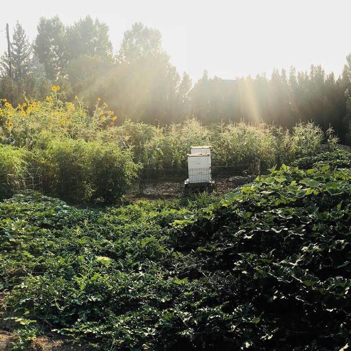 Cuộc sống đẹp như cổ tích của cặp vợ chồng cùng 4 con trai bên mảnh vườn đầy hoa và rau đẹp như cổ tích - Ảnh 11.