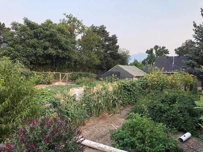 Cuộc sống đẹp như cổ tích của cặp vợ chồng cùng 4 con trai bên mảnh vườn đầy hoa và rau đẹp như cổ tích - Ảnh 10.