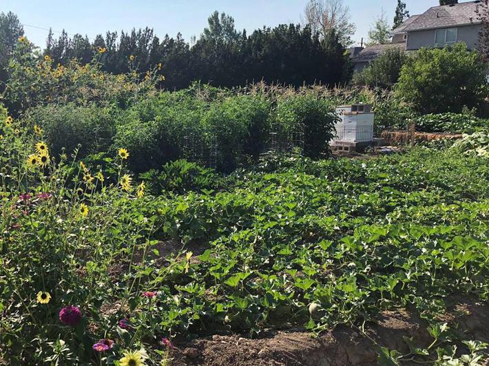 Cuộc sống đẹp như cổ tích của cặp vợ chồng cùng 4 con trai bên mảnh vườn đầy hoa và rau đẹp như cổ tích - Ảnh 9.