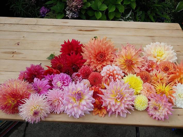 Mảnh vườn quá đỗi thơ mộng với hoa rực rỡ cùng rau quả của người mẹ trẻ cùng con gái xinh đẹp - Ảnh 19.
