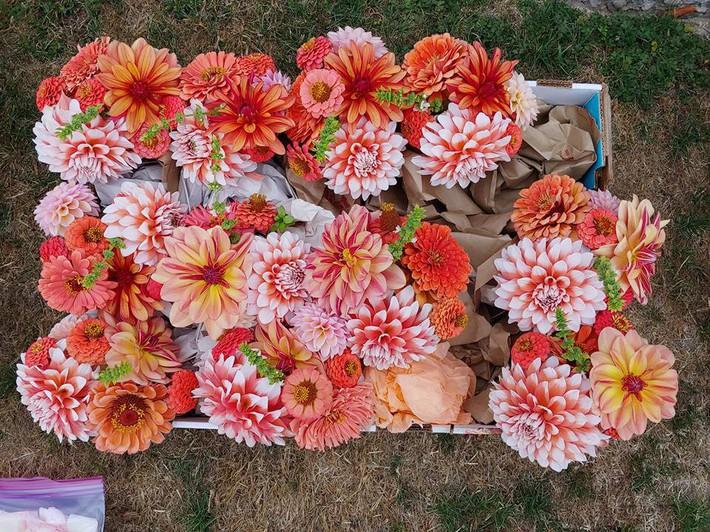 Mảnh vườn quá đỗi thơ mộng với hoa rực rỡ cùng rau quả của người mẹ trẻ cùng con gái xinh đẹp - Ảnh 17.