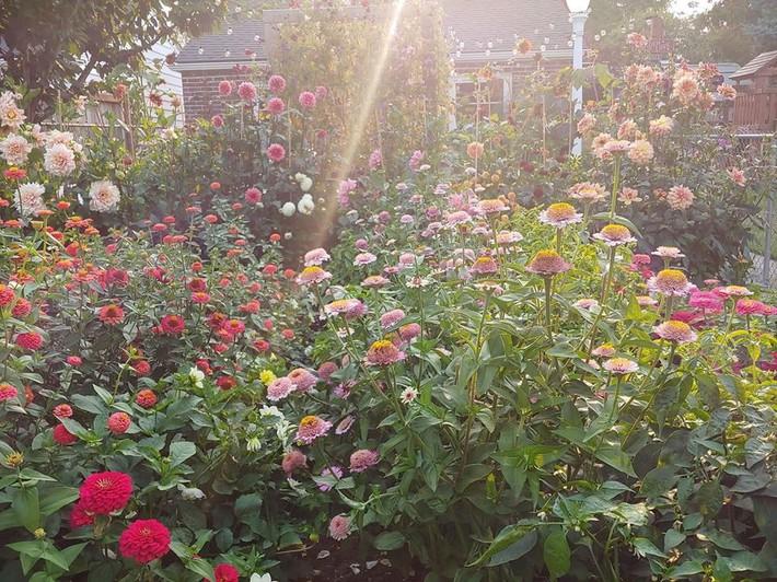 Mảnh vườn quá đỗi thơ mộng với hoa rực rỡ cùng rau quả của người mẹ trẻ cùng con gái xinh đẹp - Ảnh 16.