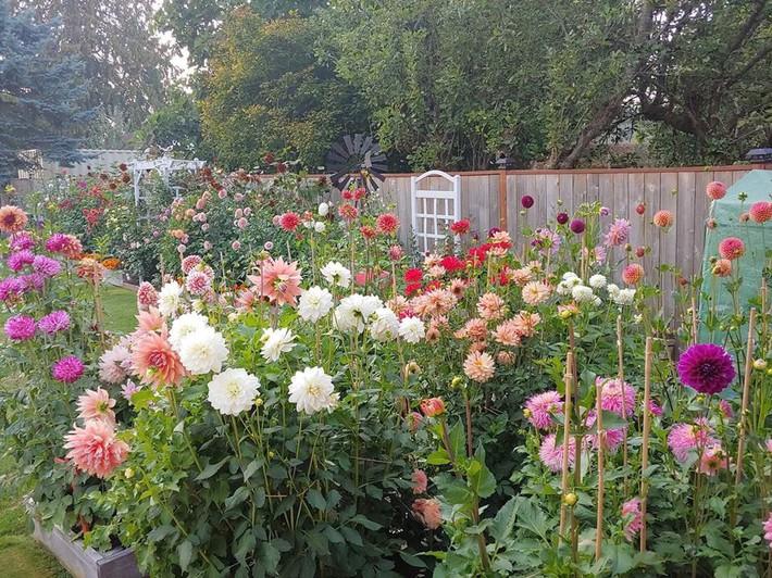Mảnh vườn quá đỗi thơ mộng với hoa rực rỡ cùng rau quả của người mẹ trẻ cùng con gái xinh đẹp - Ảnh 14.