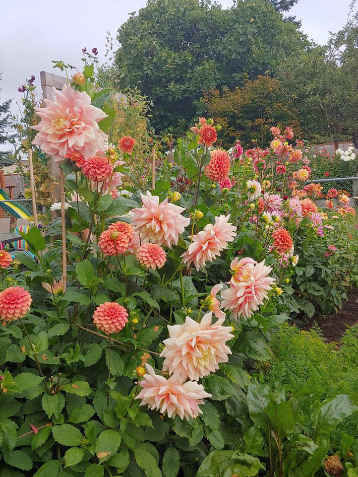 Mảnh vườn quá đỗi thơ mộng với hoa rực rỡ cùng rau quả của người mẹ trẻ cùng con gái xinh đẹp - Ảnh 9.