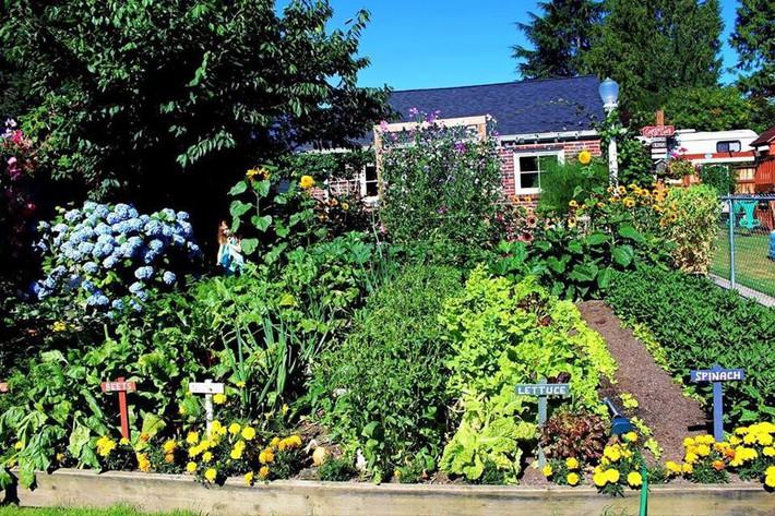 Mảnh vườn quá đỗi thơ mộng với hoa rực rỡ cùng rau quả của người mẹ trẻ cùng con gái xinh đẹp - Ảnh 2.