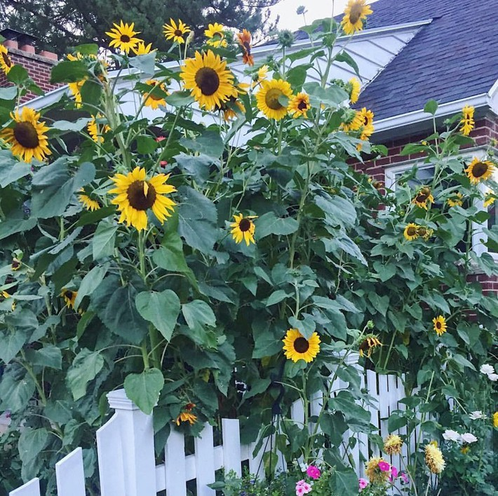 Cuộc sống đẹp như cổ tích của cặp vợ chồng cùng 4 con trai bên mảnh vườn đầy hoa và rau đẹp như cổ tích - Ảnh 4.