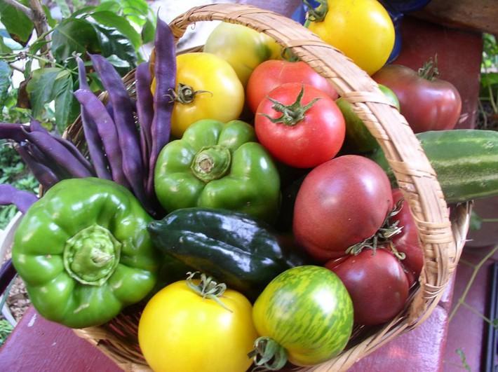 Gia đình nhiều thế hệ chung sống hạnh phúc bên ngôi nhà yên bình cùng mảnh vườn trồng rau quả sạch rộng 4000m2 - Ảnh 22.