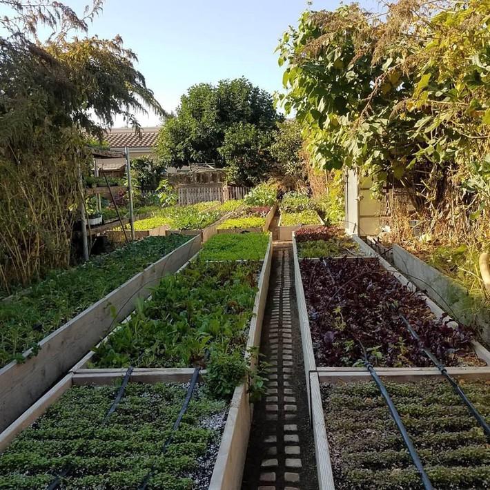 Gia đình nhiều thế hệ chung sống hạnh phúc bên ngôi nhà yên bình cùng mảnh vườn trồng rau quả sạch rộng 4000m2 - Ảnh 21.