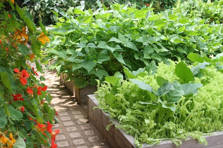 Gia đình nhiều thế hệ chung sống hạnh phúc bên ngôi nhà yên bình cùng mảnh vườn trồng rau quả sạch rộng 4000m2 - Ảnh 7.