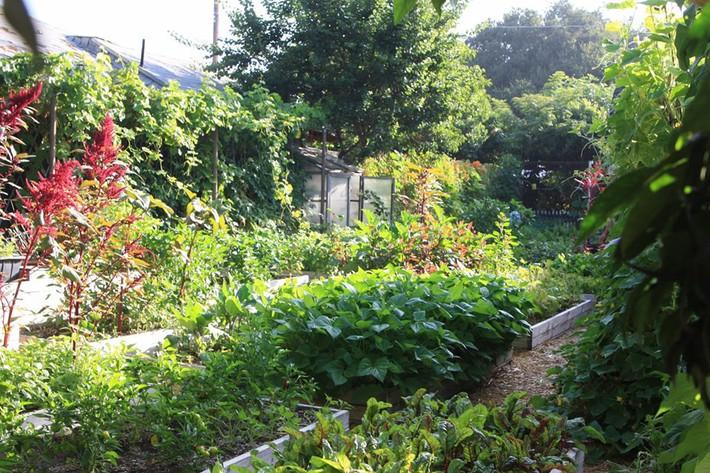 Gia đình nhiều thế hệ chung sống hạnh phúc bên ngôi nhà yên bình cùng mảnh vườn trồng rau quả sạch rộng 4000m2 - Ảnh 19.