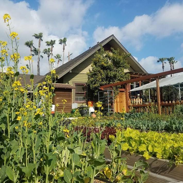 Gia đình nhiều thế hệ chung sống hạnh phúc bên ngôi nhà yên bình cùng mảnh vườn trồng rau quả sạch rộng 4000m2 - Ảnh 3.