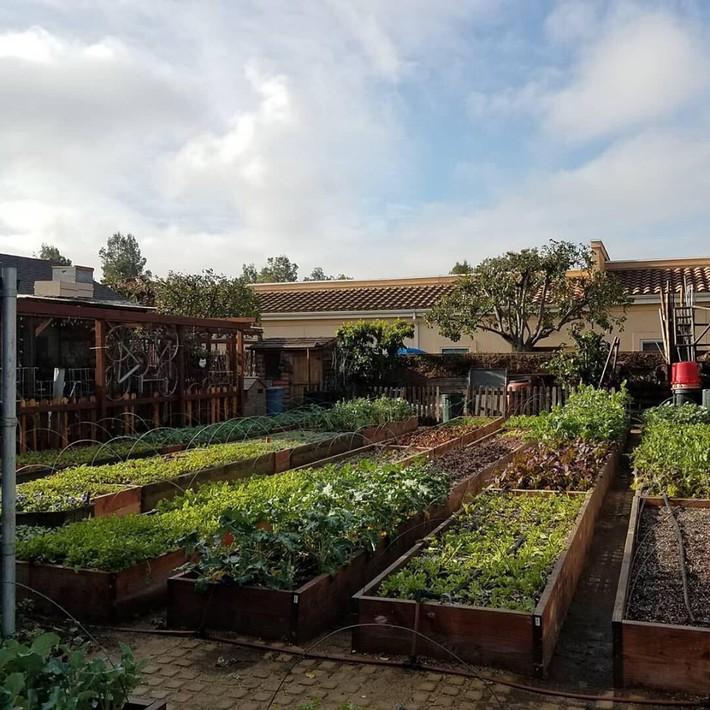 Gia đình nhiều thế hệ chung sống hạnh phúc bên ngôi nhà yên bình cùng mảnh vườn trồng rau quả sạch rộng 4000m2 - Ảnh 2.