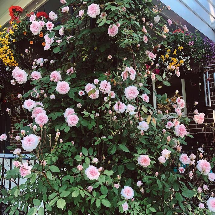 Cuộc sống đẹp như cổ tích của cặp vợ chồng cùng 4 con trai bên mảnh vườn đầy hoa và rau đẹp như cổ tích - Ảnh 2.