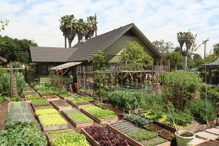 Gia đình nhiều thế hệ chung sống hạnh phúc bên ngôi nhà yên bình cùng mảnh vườn trồng rau quả sạch rộng 4000m2 - Ảnh 1.