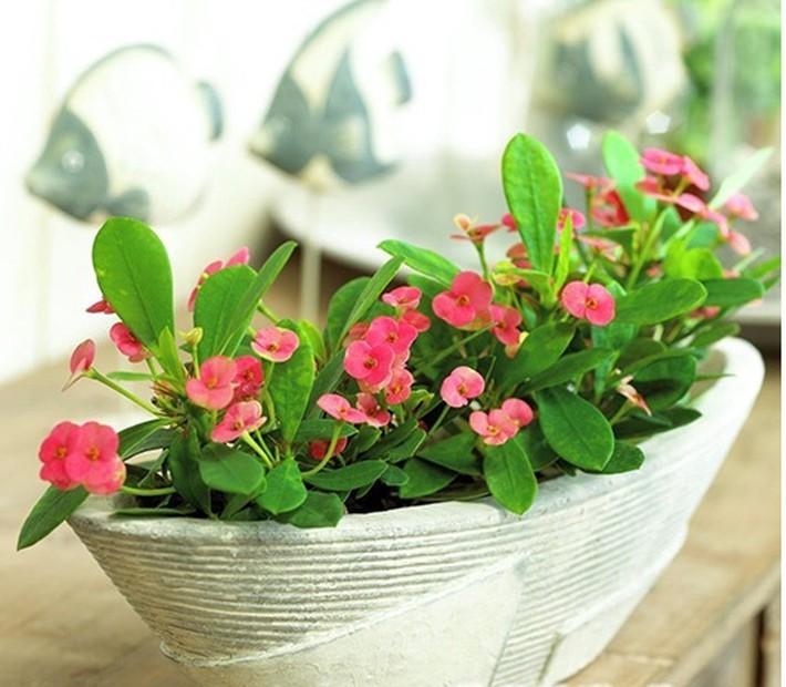 Cẩn trọng khi trồng những cây cảnh ưa chuộng trưng trong nhà nhưng cực độc nếu ăn phải - Ảnh 8.
