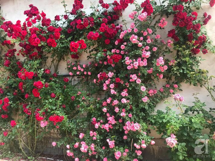 Giàn hồng nghìn bông đẹp như thiên đường hàng ngày được trồng chăm sóc để dành tặng vợ - Ảnh 1.