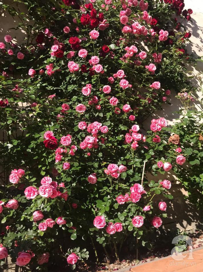 Giàn hồng nghìn bông đẹp như thiên đường hàng ngày được trồng chăm sóc để dành tặng vợ - Ảnh 11.