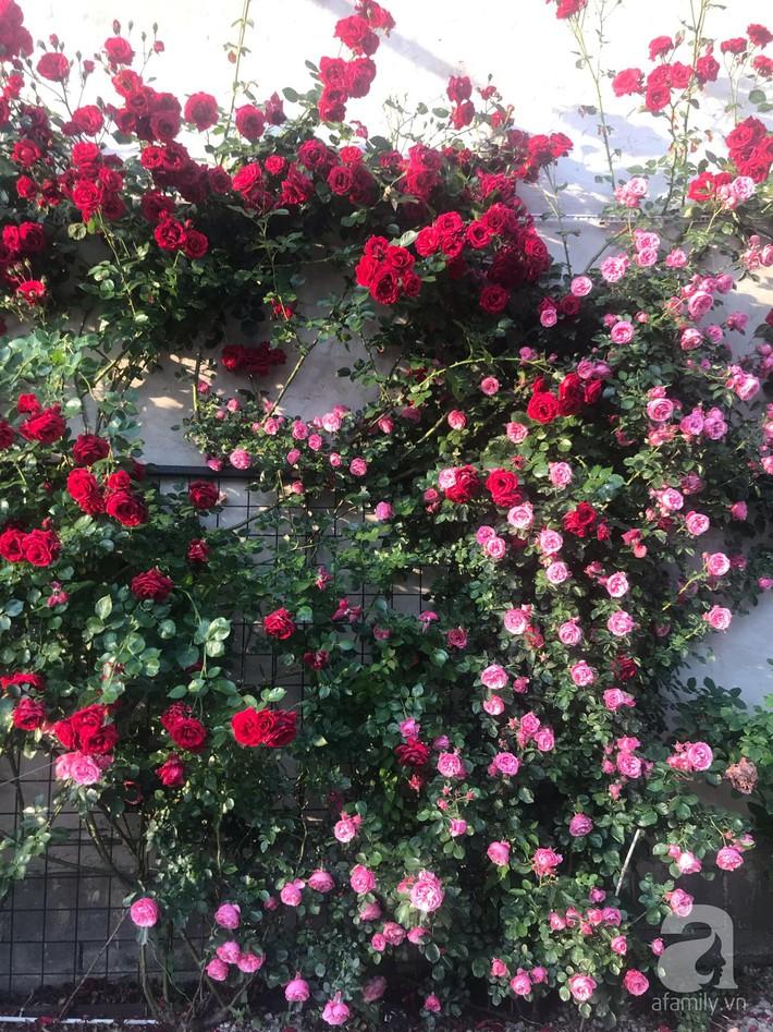 Giàn hồng nghìn bông đẹp như thiên đường hàng ngày được trồng chăm sóc để dành tặng vợ - Ảnh 7.