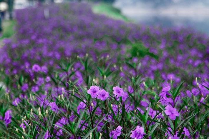 Nhiều người lựa chọn 5 giống hoa này để trồng trong nhà vì chỉ cần cắm xuống là mọc tốt um - Ảnh 3.