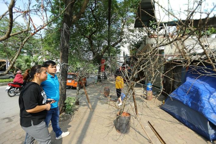 Vượt 300km về Hà Nội, đào rừng không lá không hoa hét giá khó tin gần 200 triệu đồng - Ảnh 6.