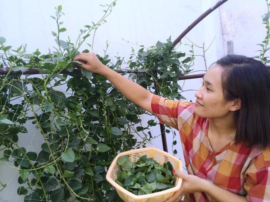 Dân gian thường dùng rau mồng tơi làm rau ăn cho mát và chống táo bónẢnh: Sơn Nhung