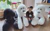 Bà ngoại bỗng nổi như cồn khi khoe bộ ảnh các cháu chơi cùng 3 chú cún cưng cực kỳ dễ thương