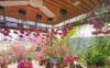 Bà mẹ Hà Nội tỉ mẩn dành 4 tiếng để tự cắm 1000 bông sen mang sắc màu mùa hạ lên sân thượng 200m²
