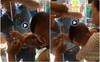 Bé trai bị kẹt chặt tay vào cửa kính: Tai nạn khi đưa trẻ đi siêu thị bố mẹ nên cẩn trọng