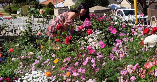 Mất 2 năm gây dựng, vợ chồng người Việt đã biến không gian sống của mình thành ngôi nhà hoa hồng đẹp ngẩn ngơ