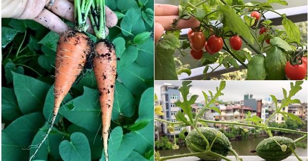 """Khu vườn vỏn vẻn 5m² trên ban công nhà phố nhưng như một """"trang trại"""" rau quả sạch giữa lòng Thủ Đô"""