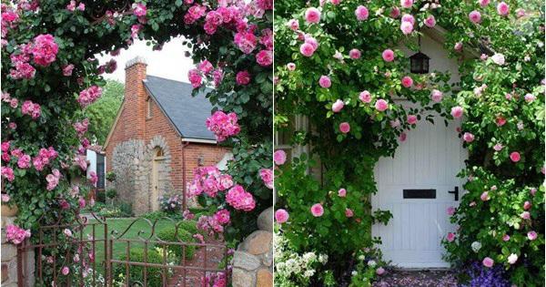Chiêm ngưỡng vẻ đẹp lộng lẫy của những cổng nhà tràn ngập hoa