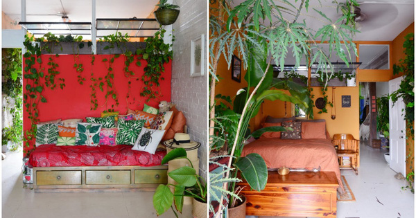 """Cô gái độc thân biến căn hộ nhỏ ở chung cư cao tầng của mình thành """"vườn cây trong phố"""""""