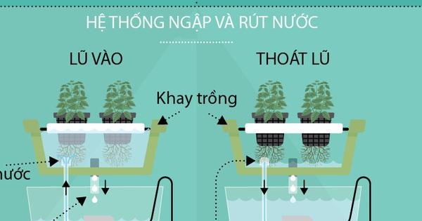 Trồng cây trong nước chưa bao giờ dễ đến thế với cách hướng dẫn dưới đây