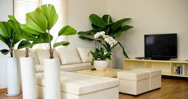 Những lỗi trồng cây phong thủy trong nhà khiến gia đình tiêu hao tài lộc