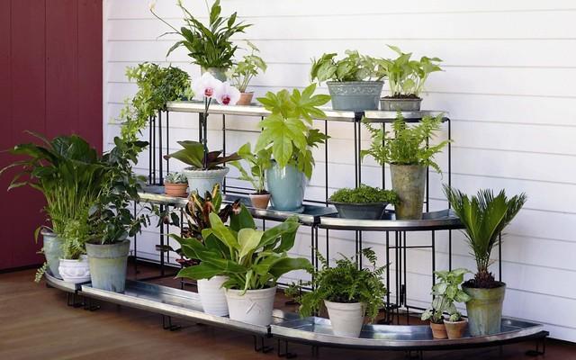 Không gian vườn nhà bạn dù có nhỏ đến đâu thì vẫn xanh mát nhờ kệ trồng cây  ấn tượng