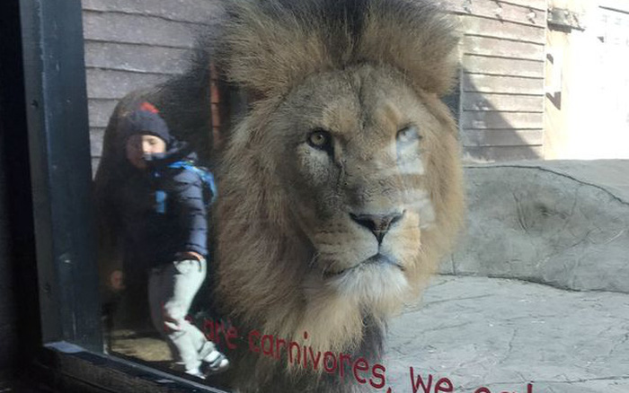 Bé trai đứng cạnh sư tử hung tợn ngay trong chuồng gây thót tim cho đến khi nghe câu chuyện xúc động của người mẹ