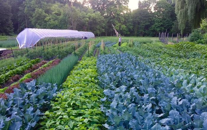 Có niềm đam mê với các món ăn nhiều hương vị, cặp vợ chồng trẻ biến khu đất rộng thành trang trại trồng cây tươi tốt