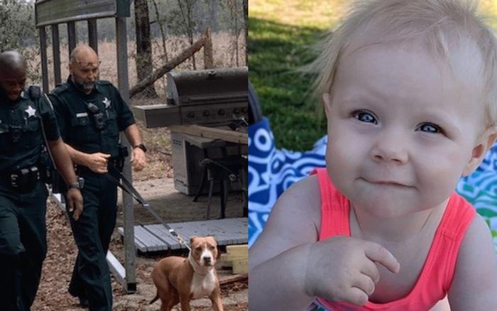 Bé trai 3 tuổi mất tích, cảnh sát nhận được tin báo về sự xuất hiện của đứa trẻ với con thú dữ, cuối cùng ai cũng phải biết ơn con vật