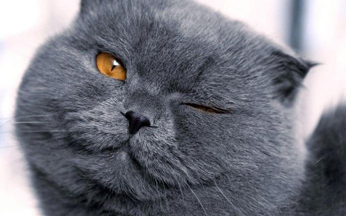 Cho ăn, hầu như hầu giời để làm thân với mèo? Sai hết, đây mới là cách thật sự hiệu quả để quyến rũ chúng mà chưa tới 1% người yêu mèo biết đến
