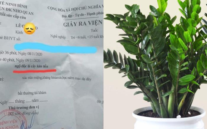 Bé 5 tuổi cấp cứu vì ngộ độc loại cây cảnh phổ biến