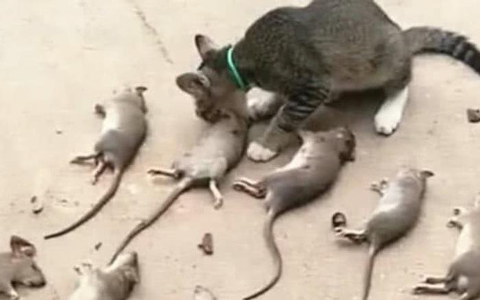 1 năm sau ngày được cưu mang, cô mèo này khiến cả làng chết khiếp vì hành động